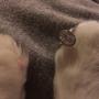 годежен-пръстен-добрич